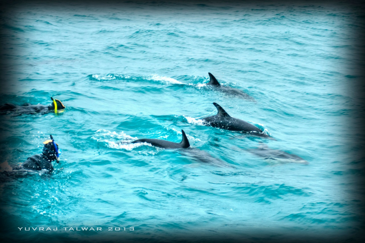 Swimming With Dusky Dolphins in Kaikoura, NewZealand