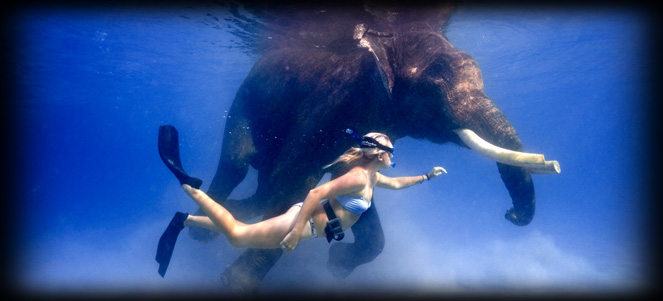 Rajan - The last of the Ocean swimming Elephants in the world.