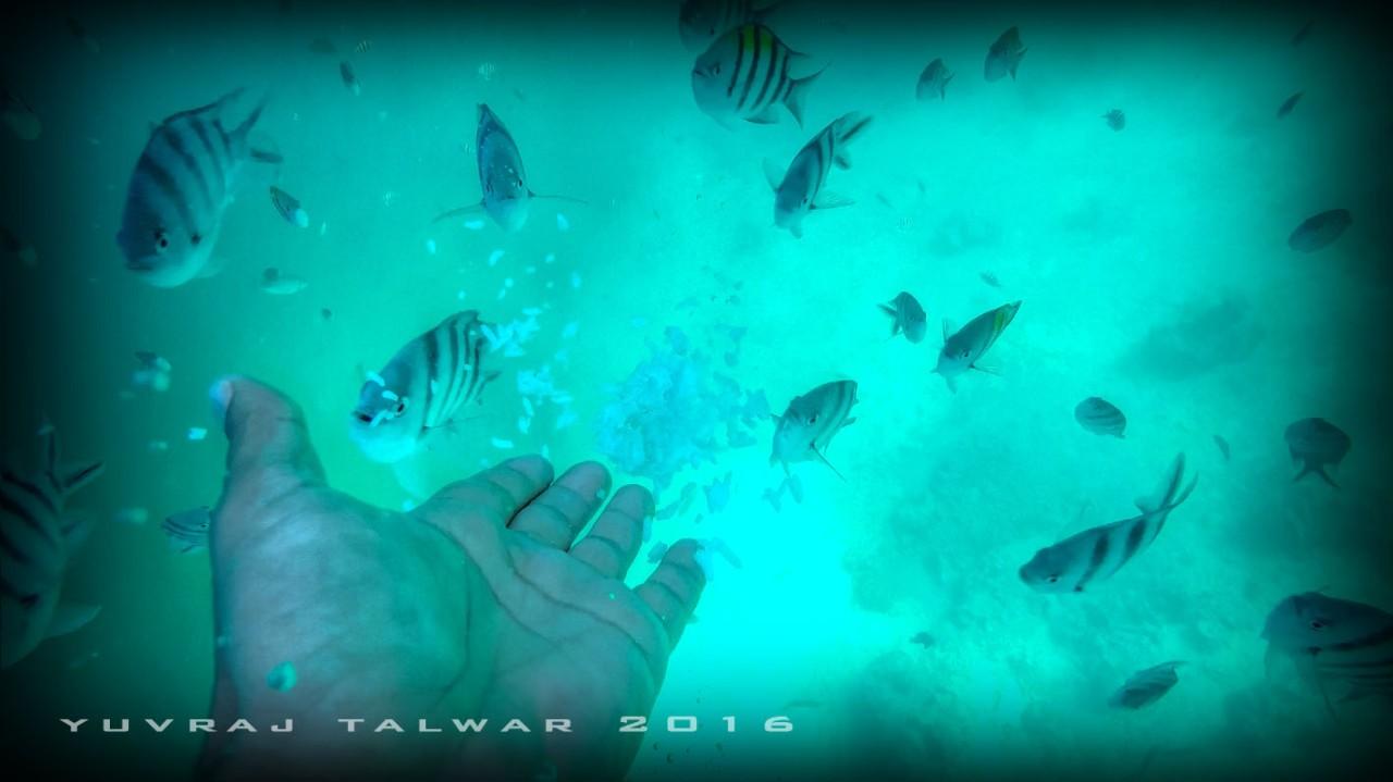 GOPR1884 Feeding Fish[(000125)2017-08-10-21-01-13]_tonemapped.jpg